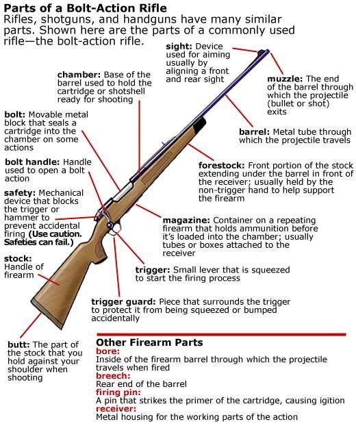 Diagram showing parts of a bolt-action rifle (South Carolina ...