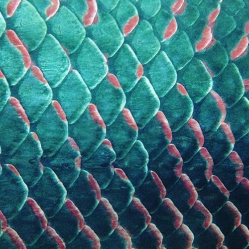 Mermaid Image Fish Scale Tattoo Fish Scales Patterns In Nature