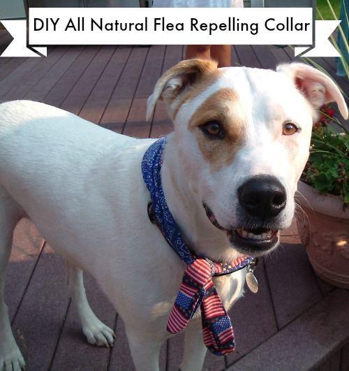 All Natural Flea Repelling Collar Dog flea treatment