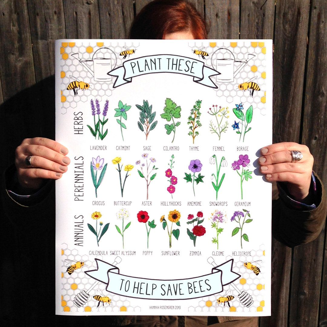 Design a 16x20 poster - Plant These To Help Save Bees 16x20 Poster Or 8x10 Print