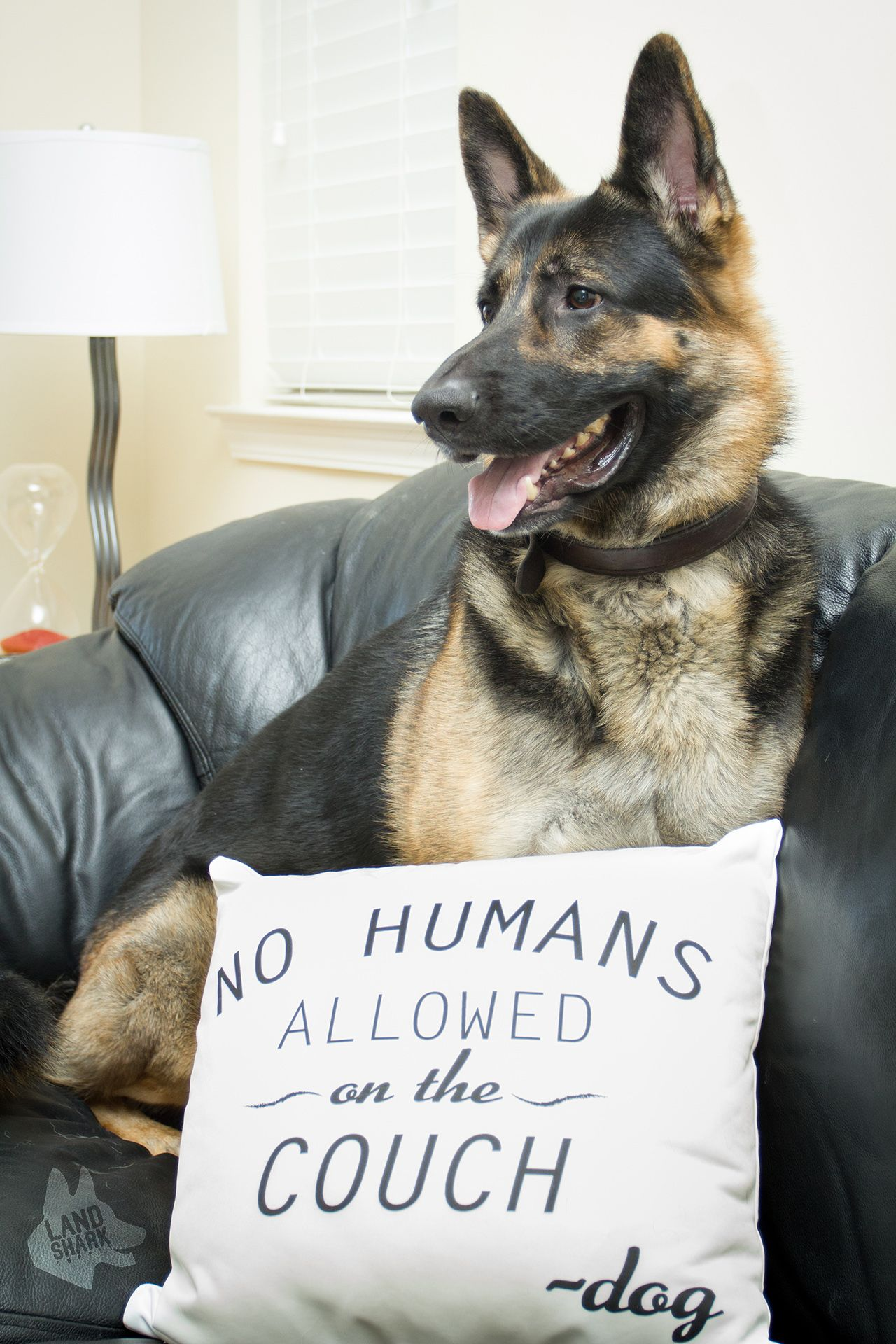 No Humans Allowed On The Couch Pillow Series 2 Dog Couch Dog