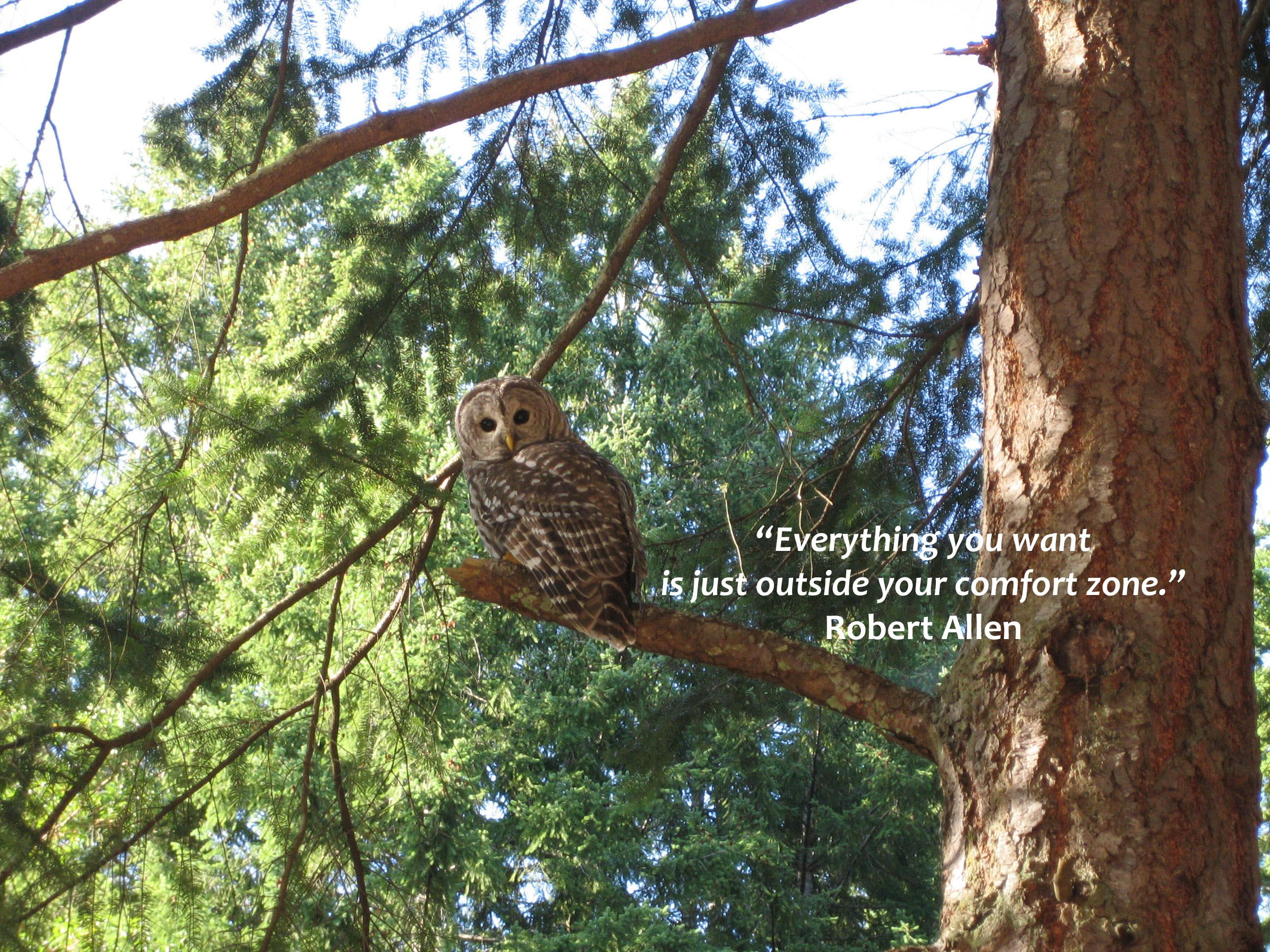 Owl Quotes  Free* Wallpaper €� Wise Owl And Quote!