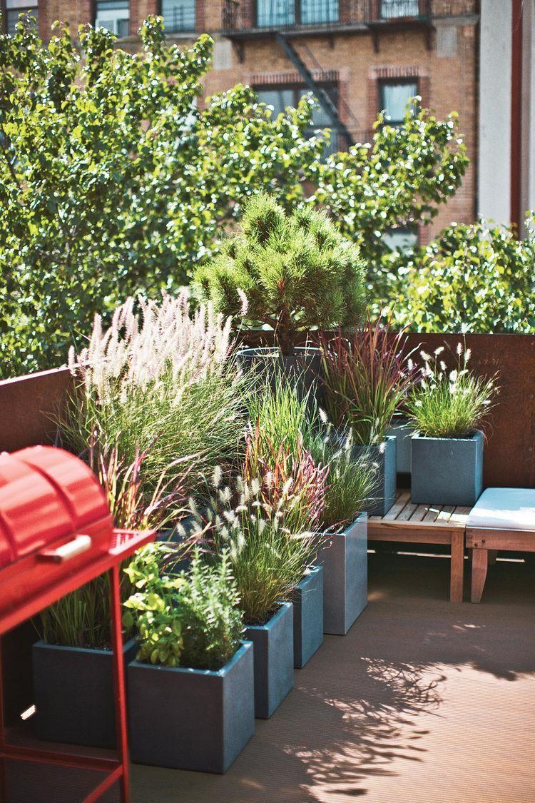 Outdoor Pflanzen Fur Terrassen Und Balkone 38 Ideen Outdoor