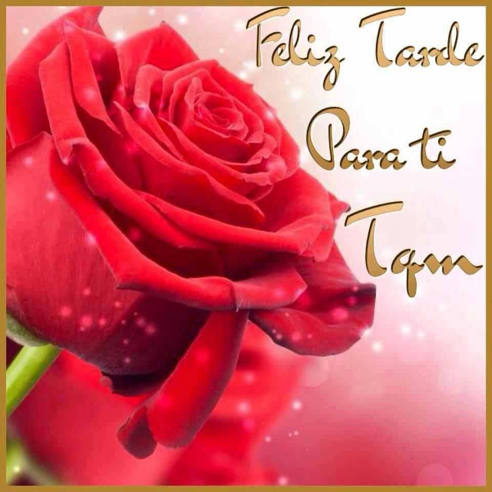 Preciosa Rosa Color Rojo Feliz Tarde Para Mis Amigas