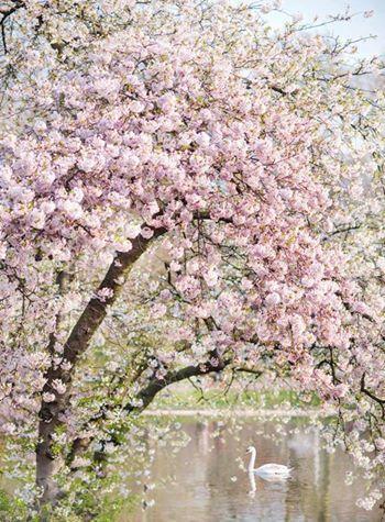 Beautiful Photos Of The World Pink Blossom Tree Blossom Trees Beautiful Nature