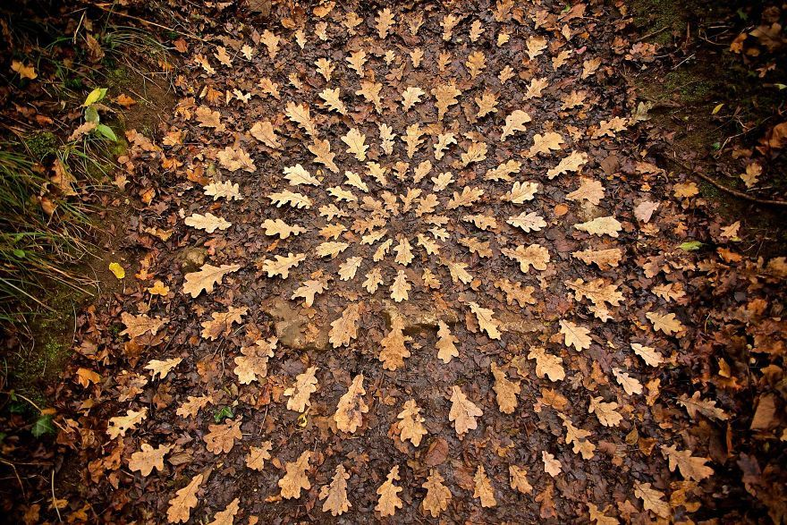 Artist Spends Hours Arranging Natural Objects Into Stunning Mandalas, Leaves Them For You To Find is part of Nature mandala, Nature art, Artist, Land art, Artwork, Mandala - Nature is beautiful as it is, but James Brunt is constantly finding new ways to make it look even more appealing  James creates artworks using natural objects he finds around his home, and their intricacy will please both your eyes and your soul