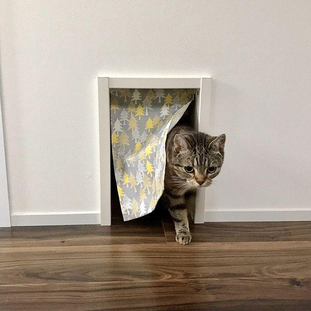 壁 天井 手作りカーテン キャットドア ねこのいる日常 ねこと暮らす などのインテリア実例 2017 06 25 20 41 10 Roomclip ルームクリップ キャットドア 猫の遊び場 猫ドア