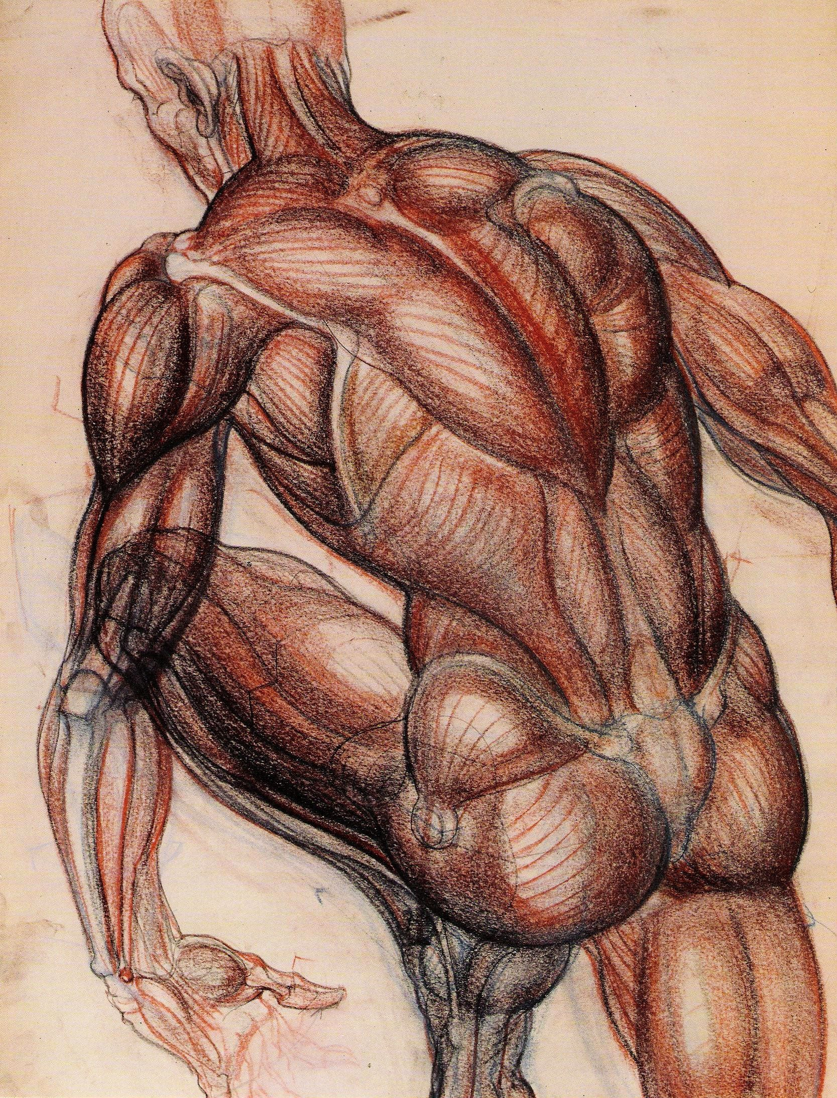 Burne Hogarth | AnatoRef - Art Anatomy & Reference | Pinterest ...