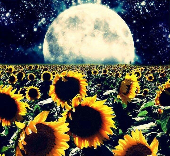 Under the moonlight   Moon painting, Sunflower wallpaper ...