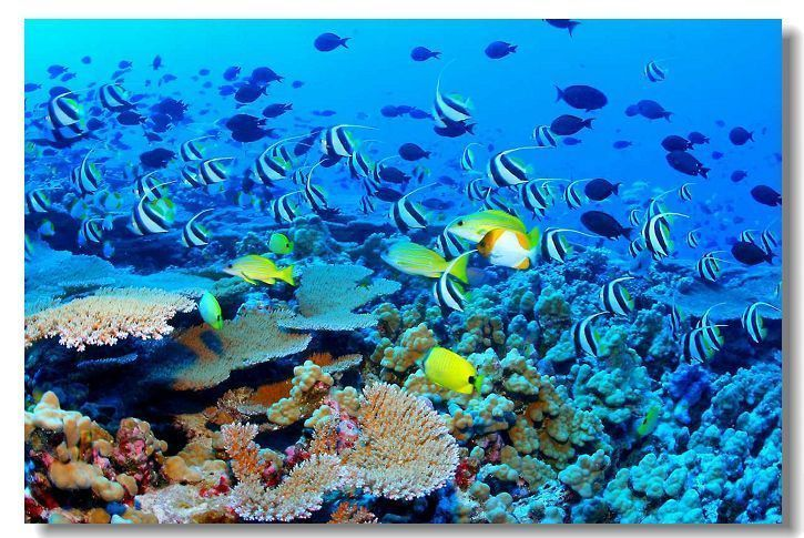 "Great Barrier Reef Landscape Sea Beach Coral Wall Silk Poster 36x24"" Photo  inch"