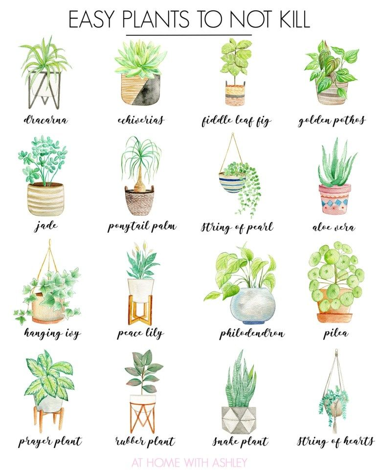 How to Get Started With House Plants - at home with Ashley