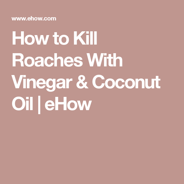 Pin By Jane Reding On Janieruthsfinds: How To Kill Roaches With Vinegar & Coconut Oil