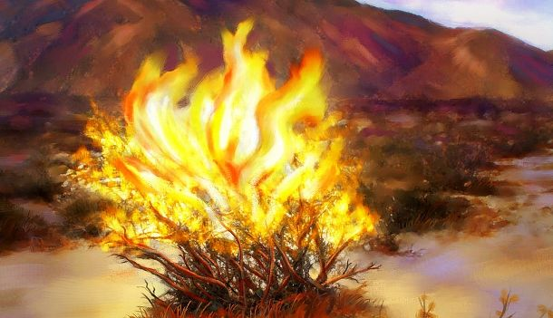 Burning bush moments | Burning bush, Burning bush craft, Moses ...