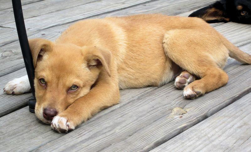 Adopt Skittles On Petfinder Dog Breeds Medium Medium Sized Dogs Family Dogs Breeds