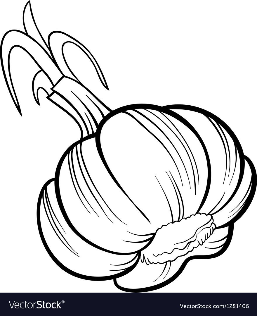 Garlic Vegetable Cartoon For Coloring Book Vector Image On