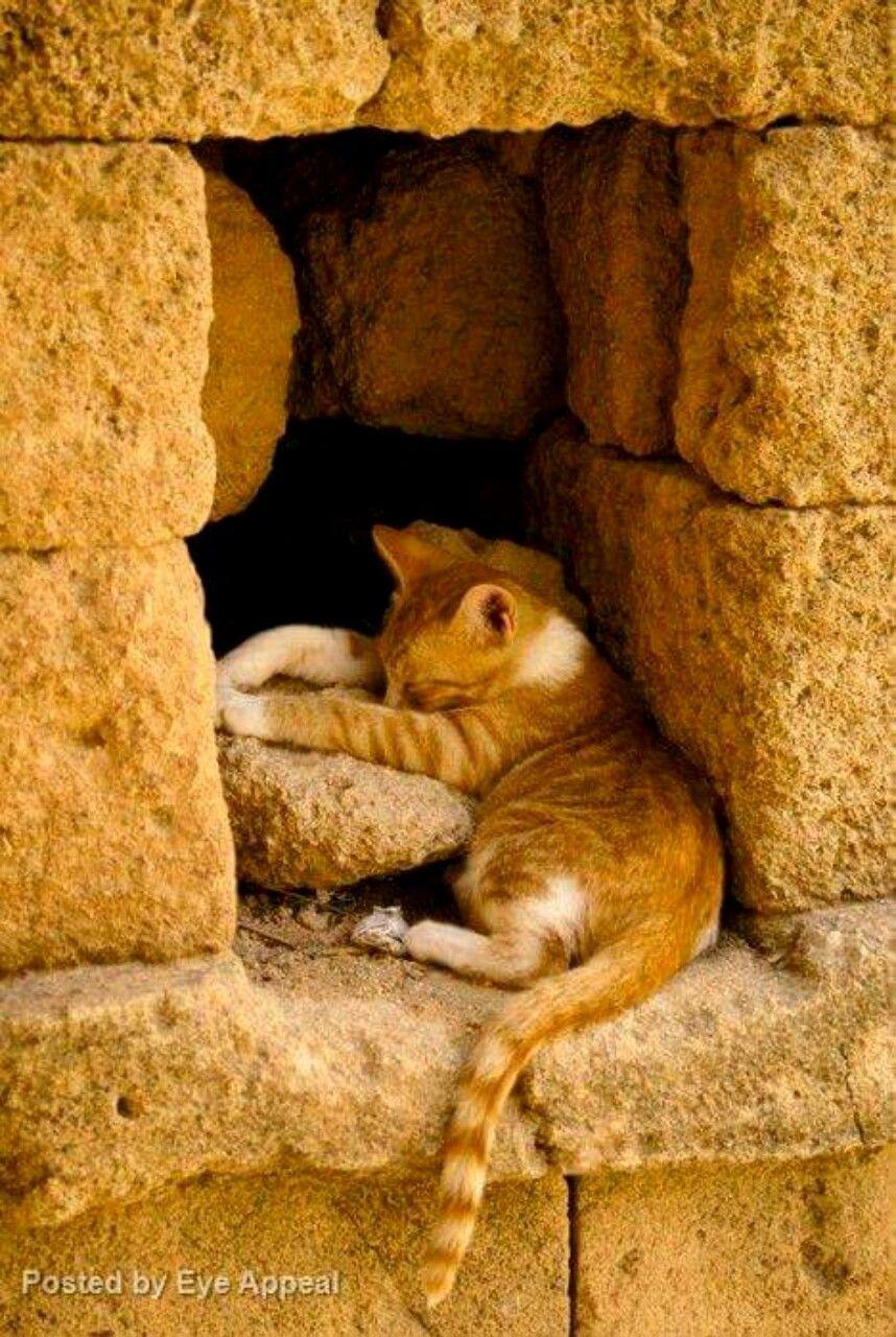 Kittens By Janice Pollard On Kittens Cats Cute Cats