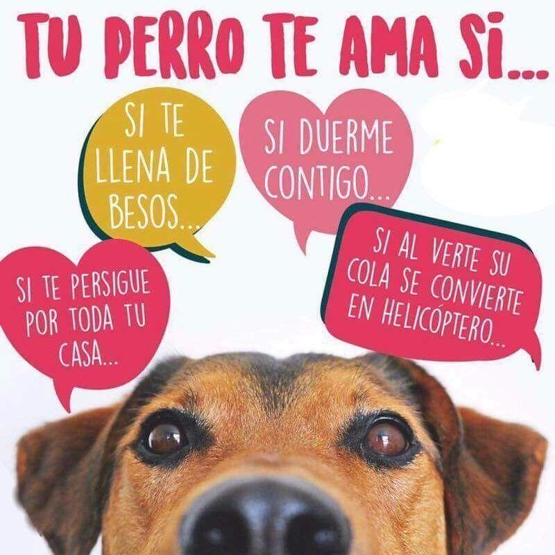 Tu Perro Te Ama Incondicionalmente Perros Amantes De
