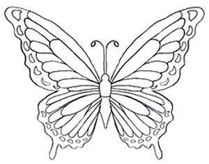25+ best ideas about Butterfly drawing images on Pinterest