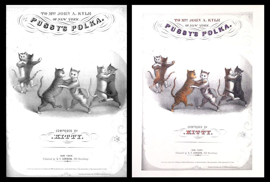Color Our Collections Color Collection Color Dancing Cat