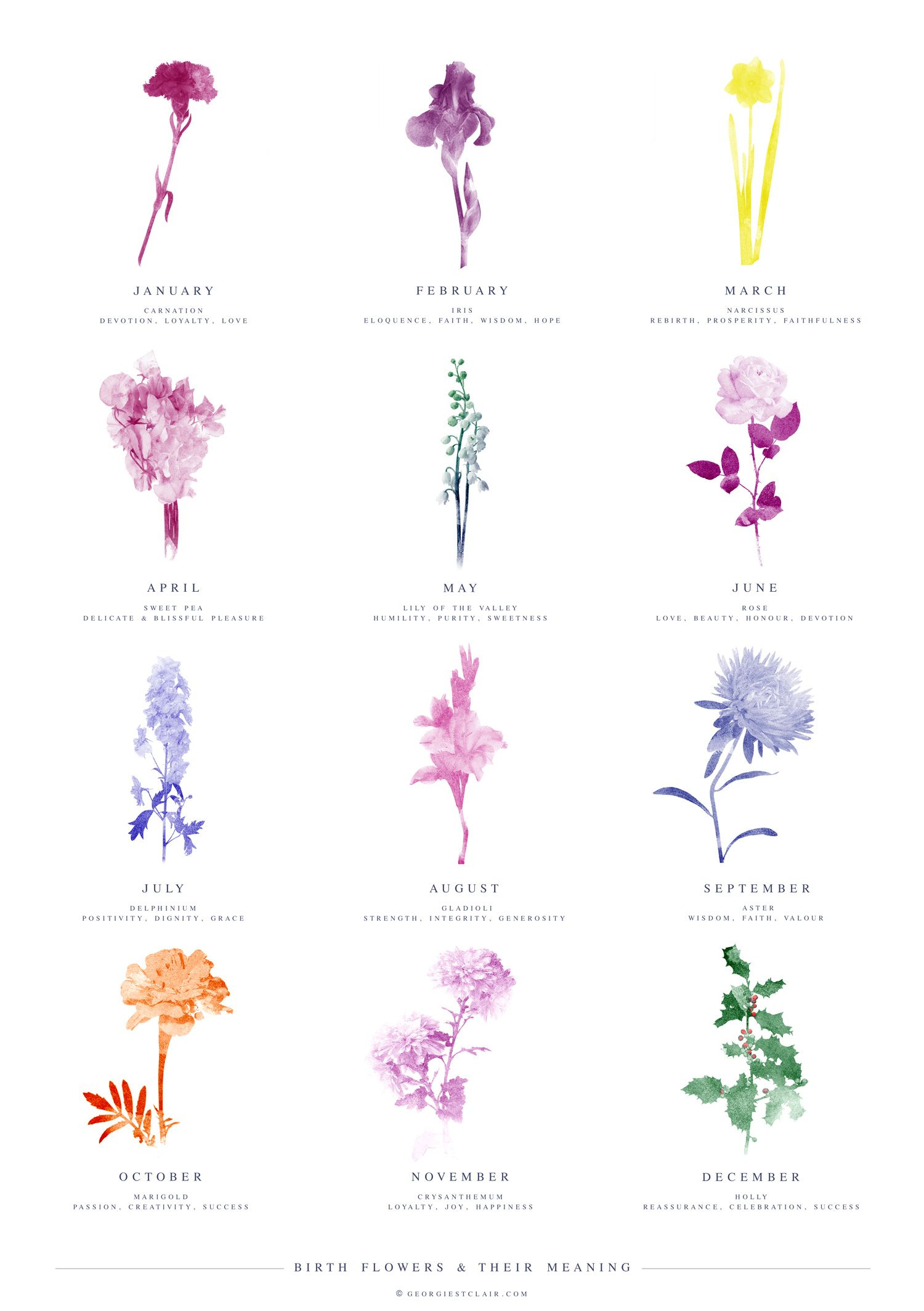 Monthly Birth Flowers and their meanings Birth flower