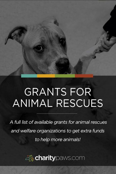 50+ Grant & Funding Opportunities For Animal Rescues & Shelters
