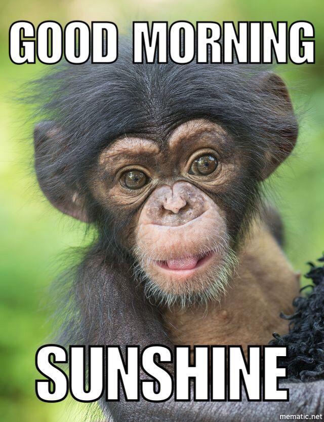 Good Morning Animals Baby Chimpanzee Cute Baby Animals