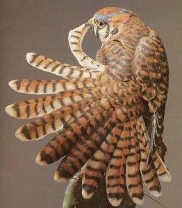 Artsy Fartsy Tuesday. Greg Woodard, bird carving.