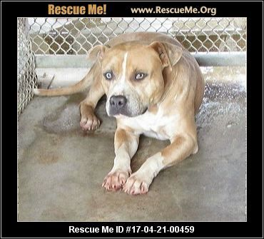 Click Here To View Dogs For Adoption Or Post One In Need Rescue Me Dogs Dog Adoption Pet Adoption