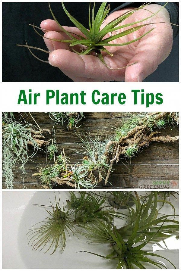 house plants that purifies the air Houseplants (With