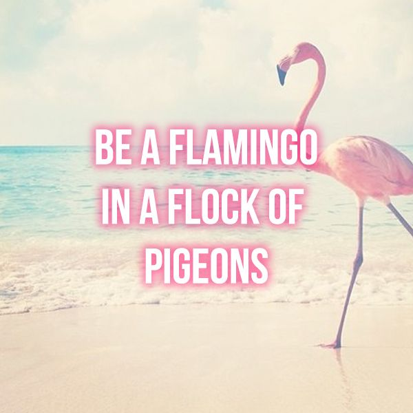 be a flamingo quote motivation flamingo girly