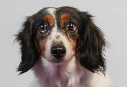 Adopt Willow A Lovely 9 Years Dog Available Long Hair Styles