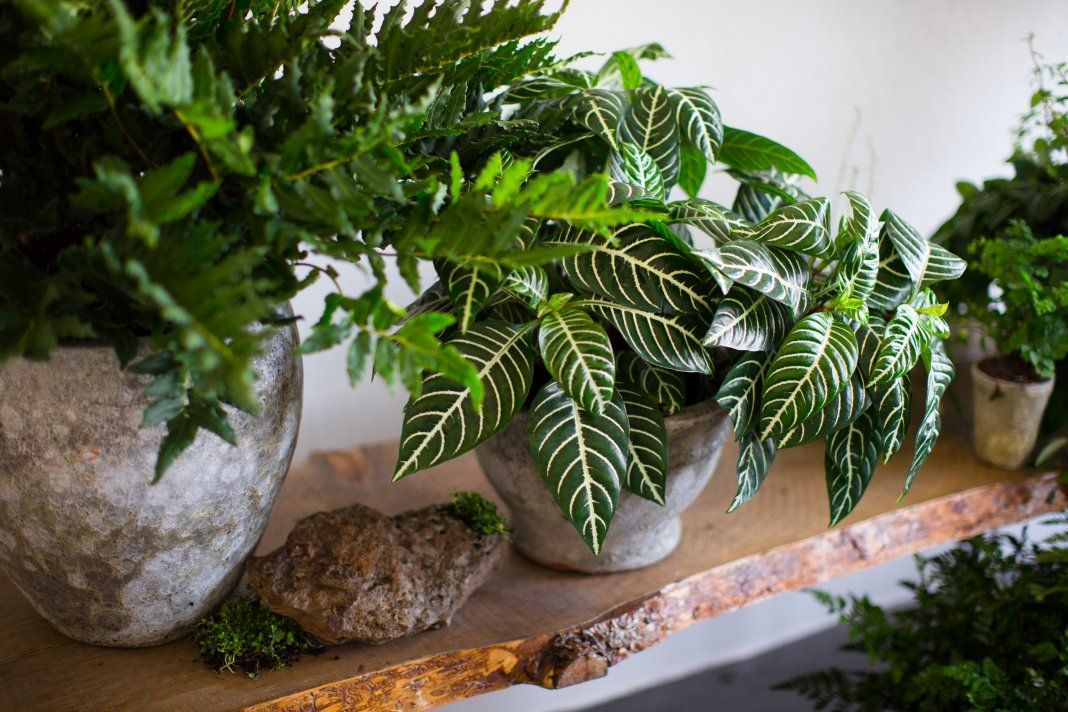 витрина домашние растения фото картинки кипит выходные, другие