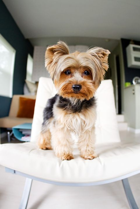 Cute Dog Breeds Like A Maltese That Won't Shed All Over