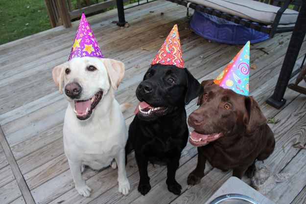 Labrador Birthday Wishes It S A Lab Thing Happy Birthday Dog Dog Birthday Wishes Dog Birthday