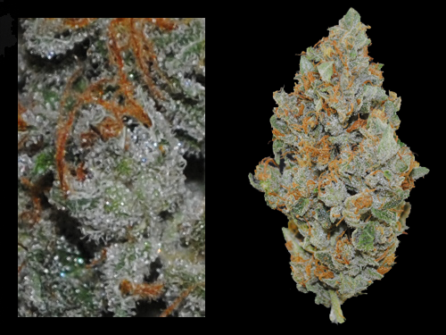 ghost train haze strain - Won Cannabis Cup.......4/20/14 in Denver