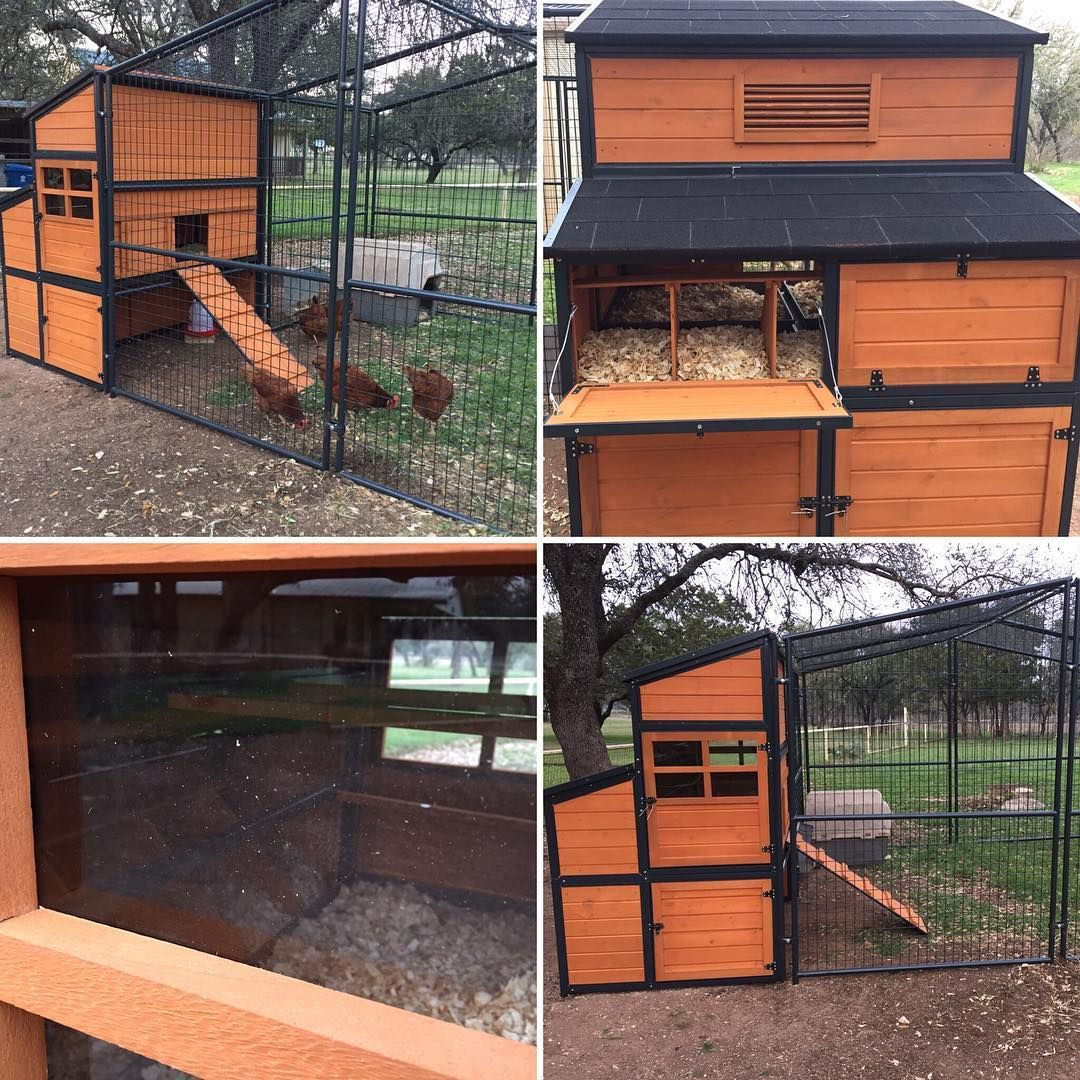 Producer S Pride Defender Chicken Coop Solid Wood Construction And Steel Powder Coated Frame 10 Ft X 10 Ft Run With St With Images Chicken Coop Coop Best Chicken Coop