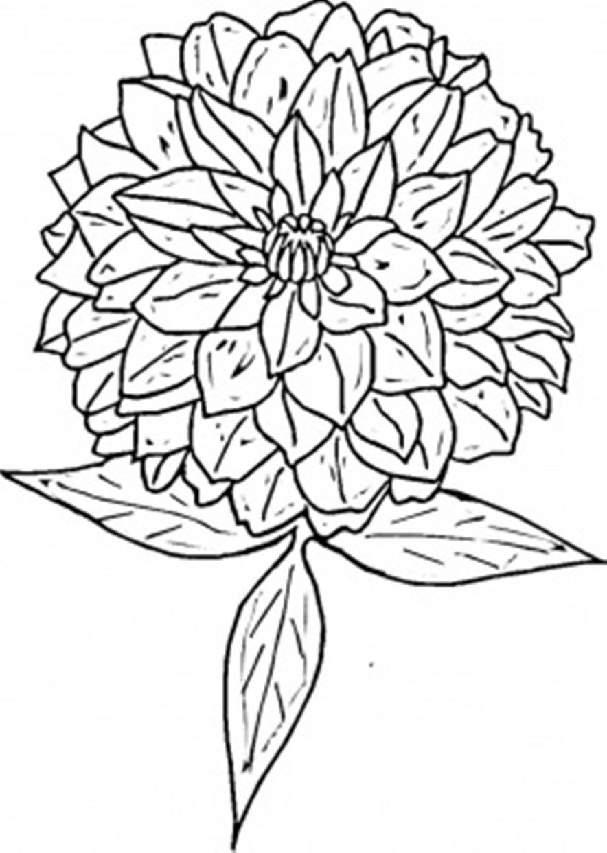 Flower Coloring Flower Coloring Page Zinnia Flower Coloring Page