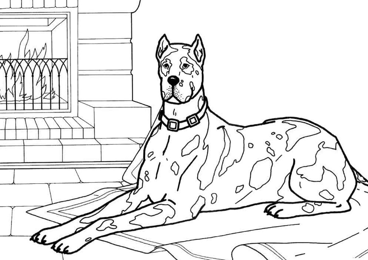 Adult Dalmatian Dog Near Fireplace In 2020 Dog Coloring Page