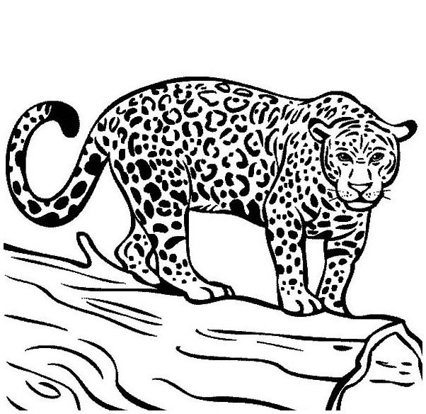 Jaguar Coloring Page Hd Jaguar Colors Animal Line Drawings Coloring Pages