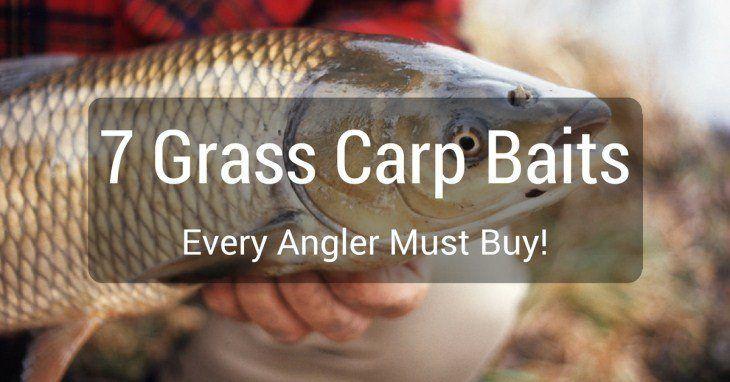 Pin By Patterson Riley On Fishing Like Boss Grass Carp Carp Fish