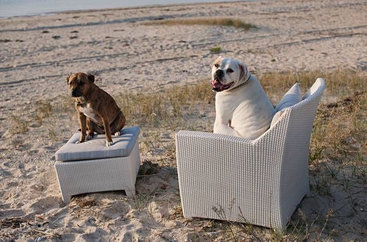Dog Days Of Summer In This Barcelona Lounge Chair And Ottoman From Dedon  Designed By Richard