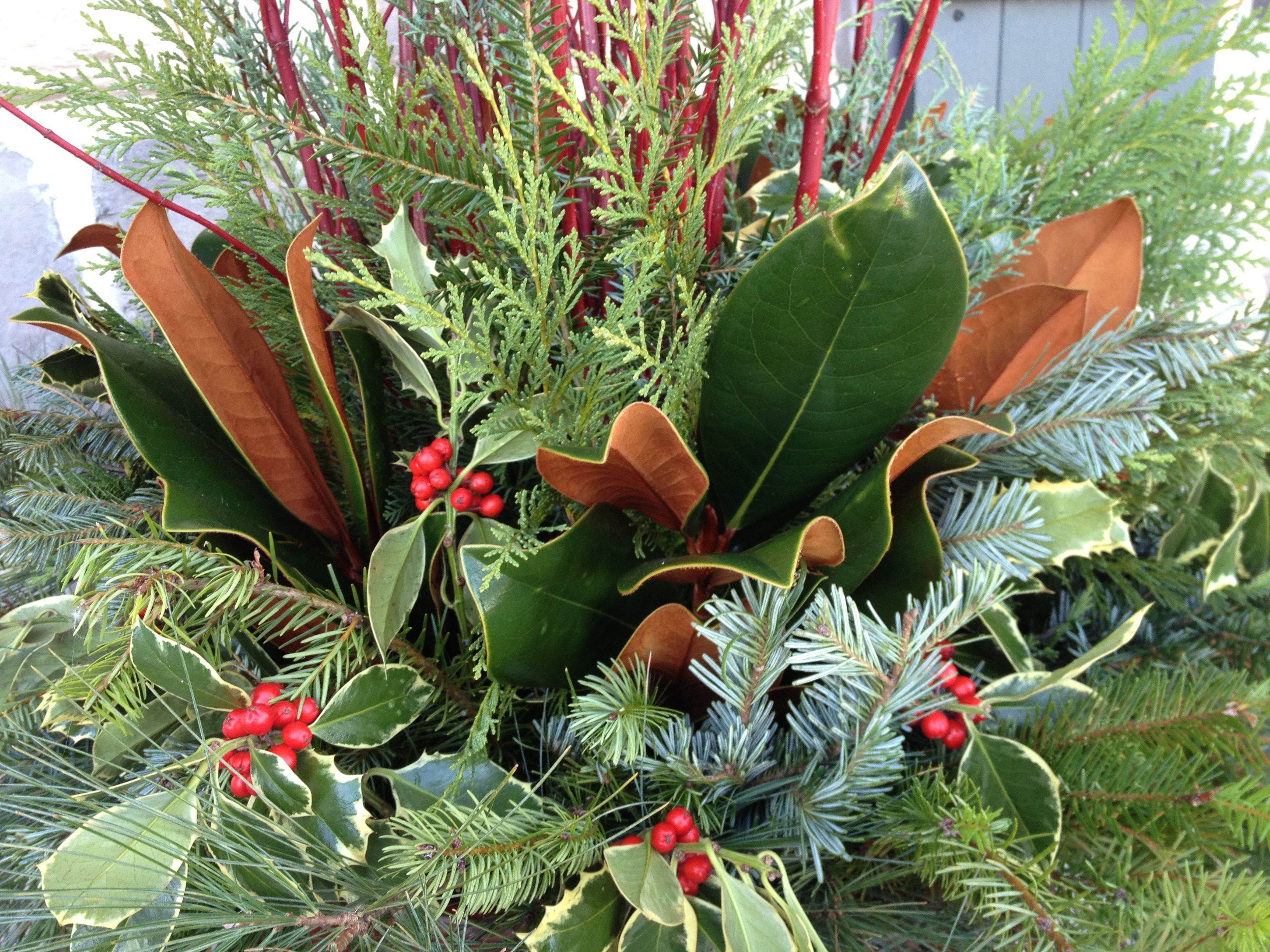 holiday christmas winter container garden evergreens magnolia