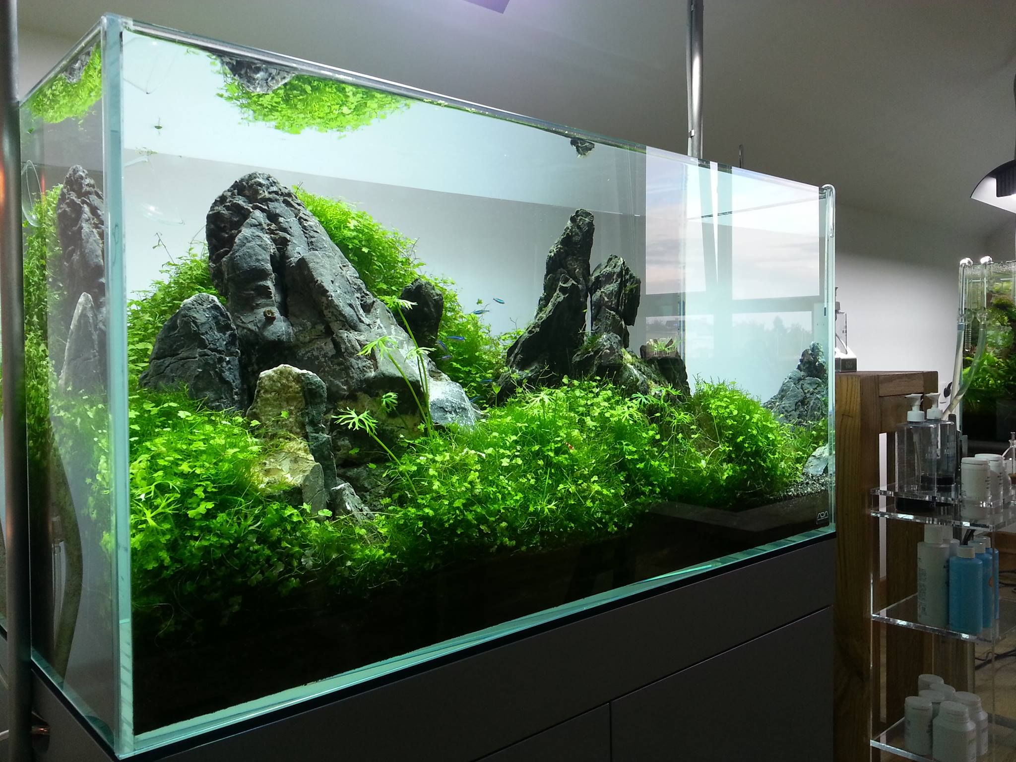 Aquascape by ada polska pin by aqua poolkoh aquascape for Ada fish tank