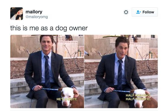 When someone asks you what kind of dog you have: #whatkindofdog