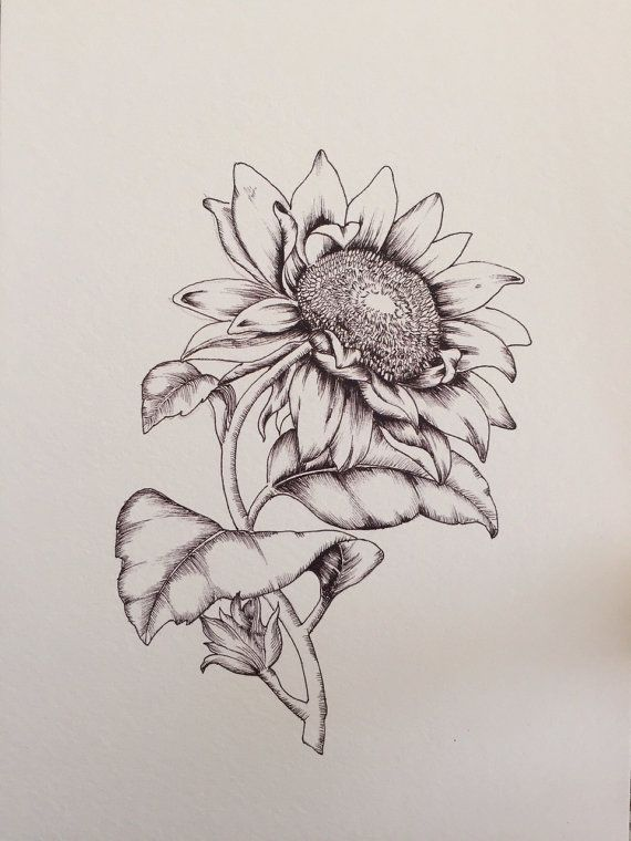 Sunflower Botanical Illustration Print Of A Hand Drawn 148 X 210 Mm Gesso Paper Custom Drawings