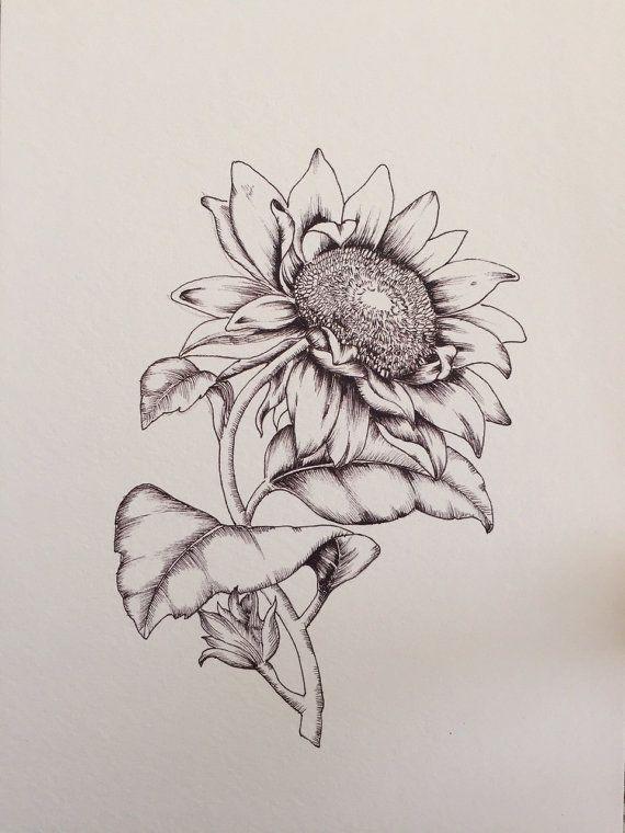 Sunflower botanical illustration print Print of a hand ...
