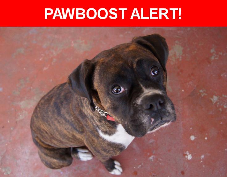 Please spread the word! Athena was last seen in Gardena, CA 90247.    Nearest Address: Near W 135th St & S Menlo Ave