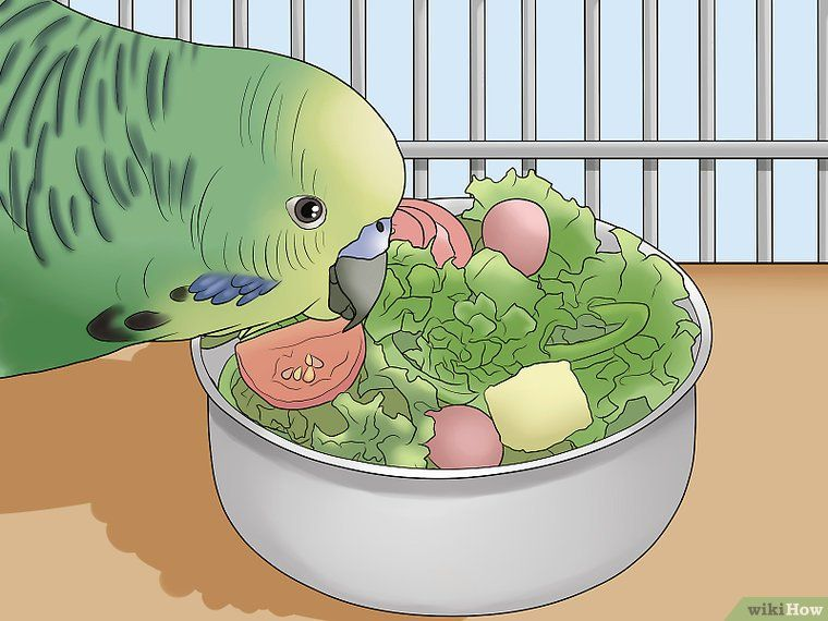 how to take care of a parakeet wikihow