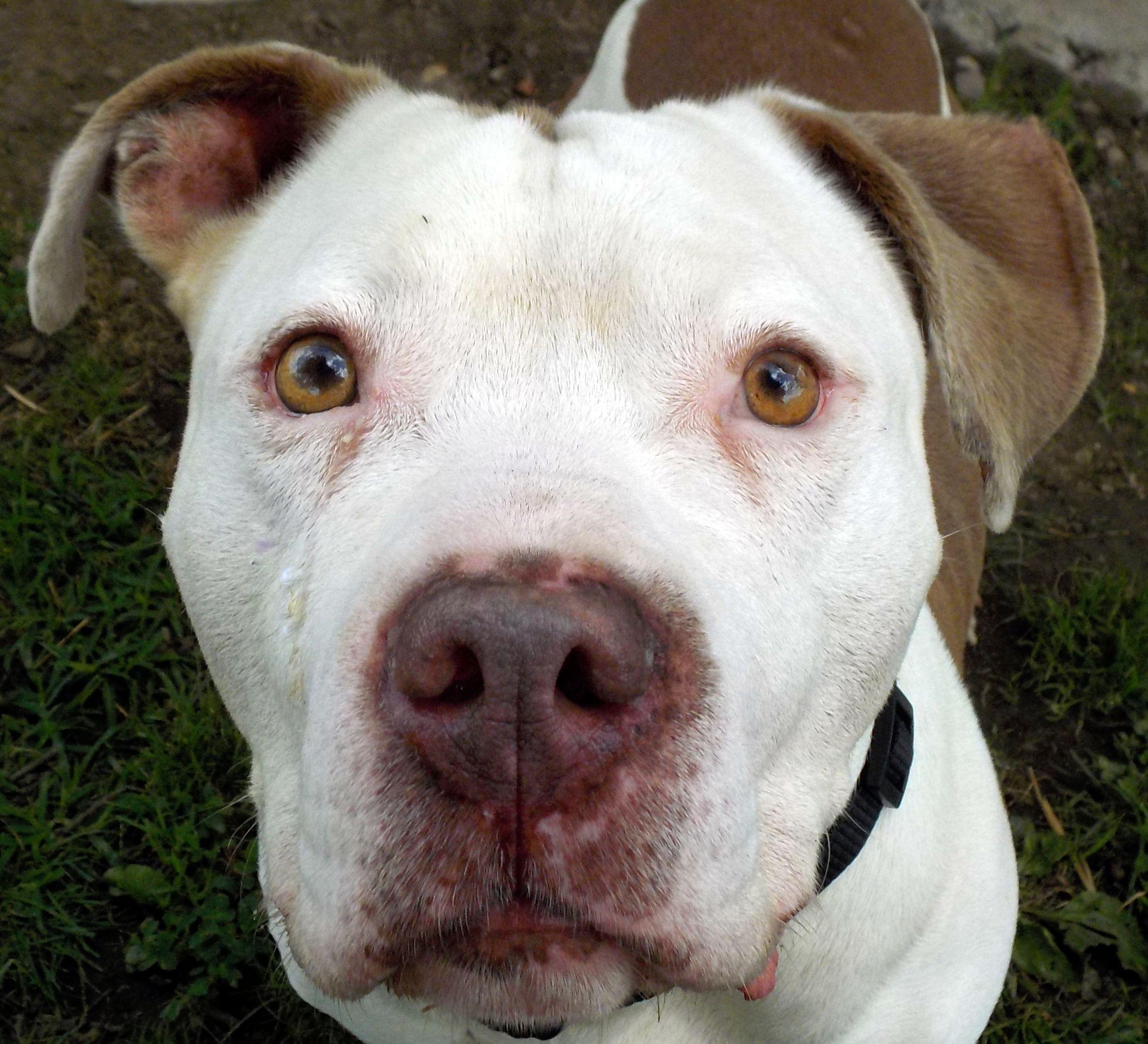 Adopt Gomer A16 ADOPTED on Pet adoption, Dog list, Adoption