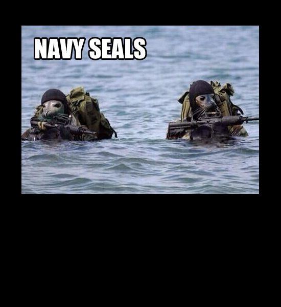 Navy Seals Pun Funny Puns Navy Seals Shark Week Funny Photos